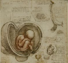 The Leonardo Da Vinci: Anatomist exhibition at The Queen's Gallery, Buckingham Palace, runs until October