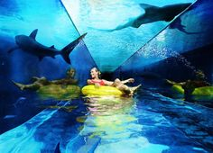 Tube and tunnel through the shark filled lagoon.  Atlantis, Paradise Island, Bahamas