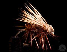 Elk Hair Caddis: En klassiker, ansvarlig for mange rugger på kroken til fluefiskere! http://fluefiskefluer.no/dagens-flue-elk-hair-caddis/