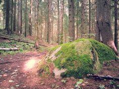 Sammaloitunut kivi