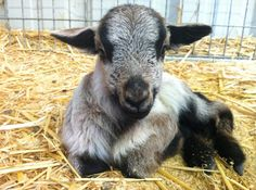 <p>The Gentle Barn is a safe haven for animals and for children, too. It's a place where animals and children can heal each other. </p>