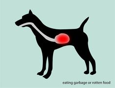 4 Ways to Treat Dog Diarrhea - Gross, but I need to remember this info!