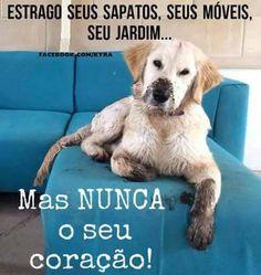 PURA VERDADE! <3 #petmeupet #cachorro #amocachorro #amoanimais Love Pet, I Love Dogs, Pet Dogs, Dog Cat, Animals And Pets, Cute Animals, Beautiful Dogs, My Animal, Pet Shop