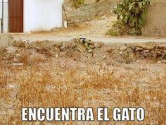 miaucoles_encuentra_el_gato_2