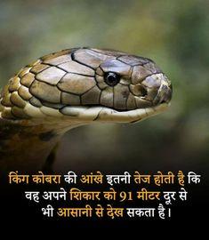 Amazing Things In Hindi