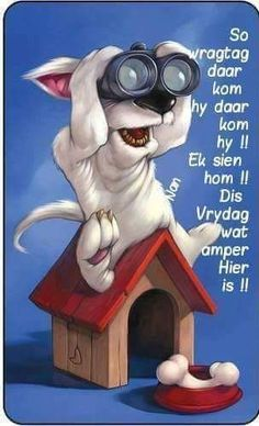 New funny animals christmas life Ideas Funny Faces Pictures, Super Funny Pictures, Dog Pictures, Caricatures, Animal Magic, Dog Quotes, Happy Weekend, Dog Art, Funny Cute