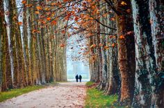 Spectacular Print Autumn Romance Stroll by JenWatsonPhotography, $12.00 Stunning Autumn Romantic Stroll. Great as a Christmas or Birthday Gift & Wall Art.  Framing also available.