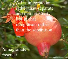 Pomegranate essence is most often used for birthing, so I like to use it for giving birth to projects and aspects of self. It helps to bring forth hidden talents and gives them a home. It helps us to see that all is integrated rather than separate and that creativity lies in that integration rather than the separation.