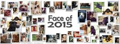 Some of the Face of 2015 competition entries https://www.facebook.com/JoshC.Photography #dogtogUK