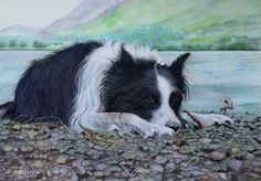 How to Paint a Border Collie using Inktense Pencils with Angela Gaughan