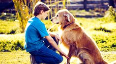 34 Thoughts We Had While Re-Watching Homeward Bound | Retro | Oh My Disney