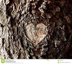 Photo about A beautiful heat formed into the knot formed from a broken branch into the deep rough bark of a deciduous tree. Image of love, shape, natural - 106287221 Deciduous Trees, Tree Bark, Love Images, Heart Shapes, Nature, Beautiful, Naturaleza, Nature Illustration, Off Grid