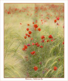La naturaleza es... COLOR by Jabi Artaraz on 500px