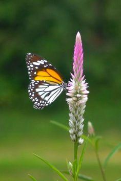 Beautiful Butterflies, Beautiful Birds, Animals Beautiful, Cute Animals, Desktop Background Pictures, City Wallpaper, Flower Embroidery Designs, Krishna Radha, Butterfly Watercolor