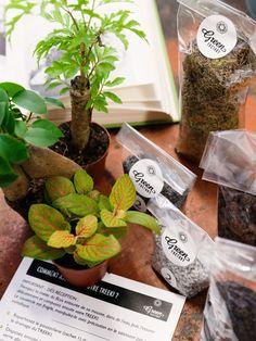 Noam réalise des compositions végétales dans des bocaux en verre avec couvercle, avec pour but de faire un écosystème autonome.