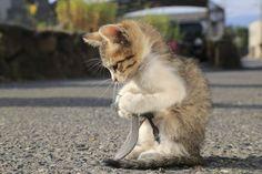 <b>猫がくるみをまわすよう</b><br> 意味:ちょっかいを出したりじゃれつくこと。<br> 猫は動くものに敏感に反応します。丸いくるみや毛糸の玉などに対しても、野生の血が騒ぐのでしょう。猫の名前の代表といえば「タマ」ですが、「玉にじゃれるから」という説もあります