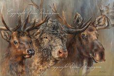 Art by Dina Perejogina Classical Art, Artist Gallery, Moose Art, Wildlife, Fine Art, Animals, Animales, Animaux, Animais