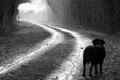 Estadísticas sobre el Abandono de Animales en España... Una vez más, por desgracia, estamos a la cabeza. Datos escalofriantes en http://animales-perdidos.com/blog/abandono-de-animales-perros-y-gatos-abandonados/