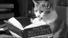 ivy-green:  A cat and a book.