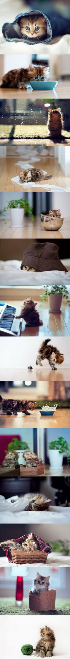 I want this kitten right now... It's so stinkin' cute!!!