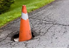 At the first sight of Spring the Rhode Island state flower can be seen blooming on every roadside.