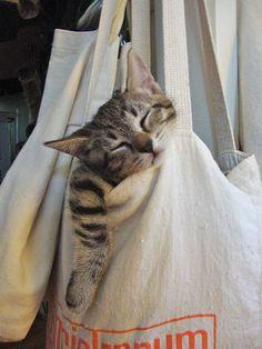 Sleepy time Cat kitten adorable gorgeous love