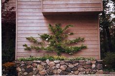 Jarombek Gardens, LLC - The Plants We Use: Trees