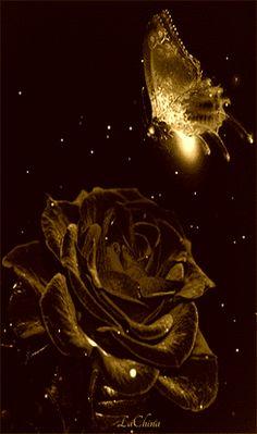Un blog cu gif-uri: Gifuri noi foc Butterfly Gif, Butterfly Pictures, Butterfly Wallpaper, Flower Pictures, Butterflies, Beautiful Rose Flowers, Beautiful Flowers Pictures, Beautiful Gif, Beau Gif