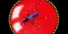 Insectos surgieron hace 480 millones de años
