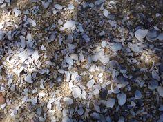 Small shells on tidal beach of Frenchmans Bay, Abel Tasman National Park, NZ