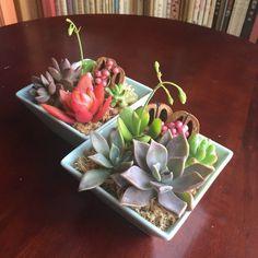 淡い水色の四角い鉢に、多肉植物を寄せ植えしました。これから温かくなる季節にぴったりの、さわやかな色合いに仕上がりました♪水やりは月に1~2回程度で良いので、お...|ハンドメイド、手作り、手仕事品の通販・販売・購入ならCreema。