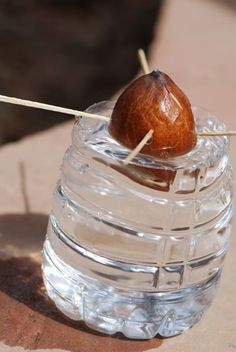 Stop-Buying-Avocados.-Here's-How-to-Grow-an-Avocado-Tree-in-a-Small-Pot-at-Home-1