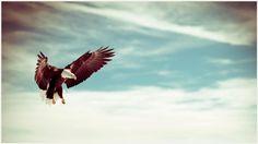 Flying Eagle Wallpaper | flying eagle wallpaper 1080p, flying eagle wallpaper desktop, flying eagle wallpaper hd, flying eagle wallpaper iphone