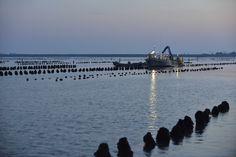 Pêche. Moules de bouchot à l'Aiguillon sur Mer.