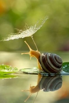 seasonalwonderment: Snails