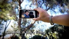 VFF: Film Profile: GRAHAM: A DOG'S STORY
