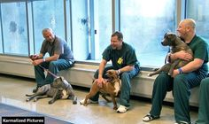 A Scheme Saves Dogs From Death Row And Uses Convicts To Train Them For Adoption