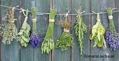 Kompletný zoznam: 64 bežných ochorení a bylinky, čo ich liečia