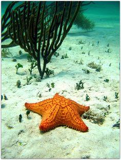 Vida marina. Varadero, Cuba, Animals, North Shore, Marine Life, Cities, Scenery, Animales, Animaux