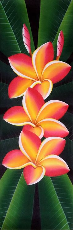 """Saatchi Art is pleased to offer the painting, """"Frangipani,"""" by Natalia Davis. Original Painting: Acrylic on Canvas. Acrylic Painting Canvas, Fabric Painting, Painting & Drawing, Canvas Art, Painting Flowers, Buy Canvas, Drawing Flowers, Photographie Street Art, Indian Art Paintings"""