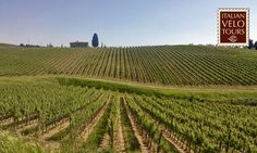 Cycling in Chiantishire, Colli Fiorentini, south-east of Florence.