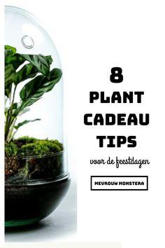 De feestdagen zijn alweer in zicht! In deze blog laat ik jullie superleuke plant cadeau tips zien die je ook nog eens makkelijk kan opsturen! #plantcadeau #cadeautips #cadeauidee #kado #feestdagen #planten #plants #kamerplanten #urbanjungle Clusia, Calathea, Tips, Herbs, Plants, Blog, Herb, Blogging, Plant