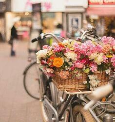 pink geraniums blumendeko pinterest balkon blumendeko und topfgarten. Black Bedroom Furniture Sets. Home Design Ideas