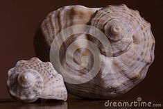 sea-shells-brown-background Sea Shells, Brown, Seashells, Brown Colors, Shells
