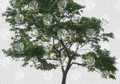 Big tree cutout by Gobotree