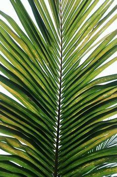 palm perfect #nature #palms