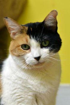 Fannie Mae 31106 Calico Cat | Atlanta GA