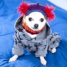 "A little ""Bitt"" of cuteness to brighten up your weekend   Visit @bittdogoflove for more adorable pics!  #allyouneedispug #igdogs #igpugs #instadog #pets #dogs  #dogsofinstagram #doglife #doglove #dogswithstyle #petstagram #chihuahua #chihuahuasofinstagram #toydog #smalldog #doghat #etsy #handmade #petapparel #happycustomer #dogclothes #dogfashion"