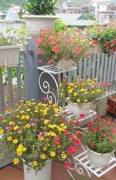 Portulaca Flowers, Portulaca Grandiflora, Planting Flowers, Garden Yard Ideas, Diy Garden Decor, Garden Art, House Plants Decor, Plant Decor, Flower Pot Art