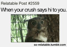 funny teen quotes about crushes
